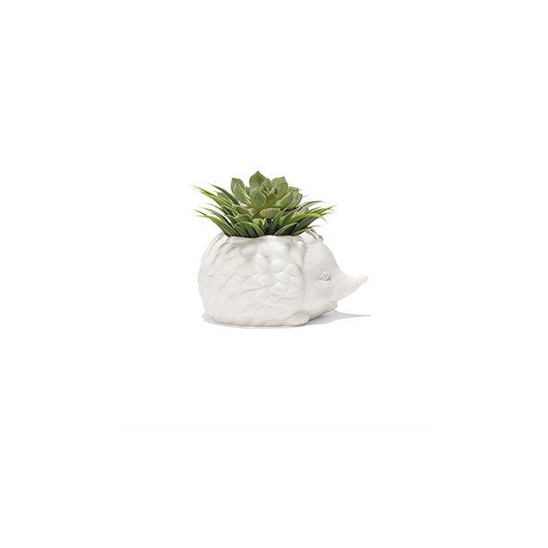 Pindsvin planteskjuler